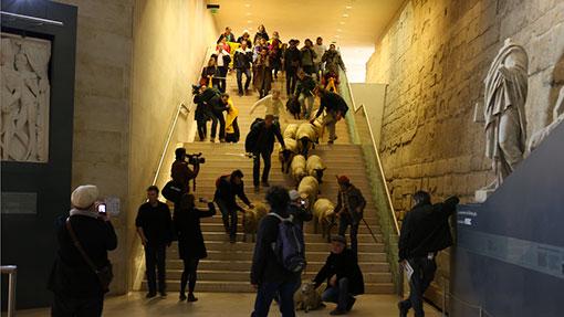 Louvre Sheep
