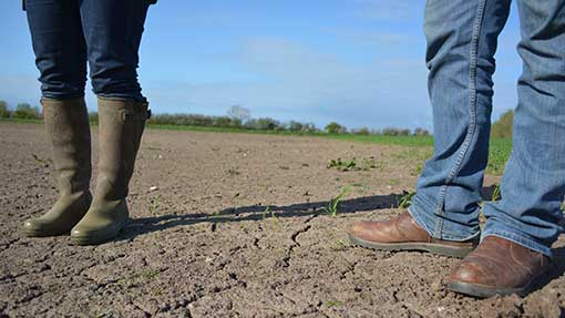 Drilled last autumn, this winter wheat field will now be re-sown with maize.