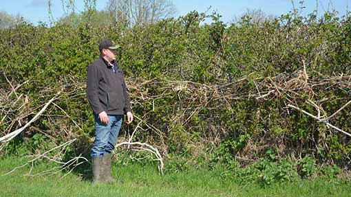 A tide mark of debris and reeds marks the height of the flood water along this hedge.