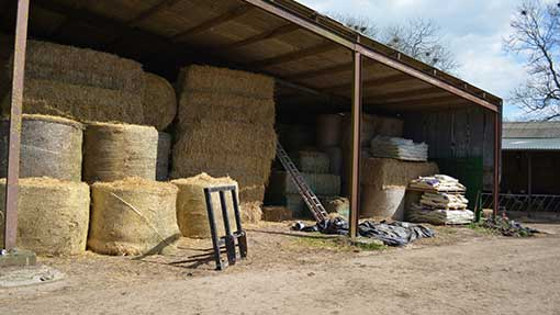 Sheds are being stacked with straw bedding – it will be months before cattle graze outside.