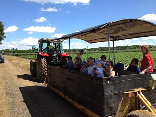 Tuesley Farm Open Farm Sunday