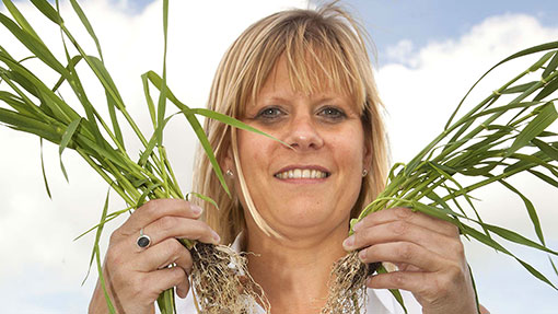 Wheat roots at Cereals 2014