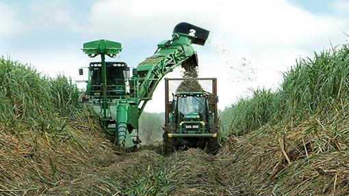 Sugar-cane-harvester2