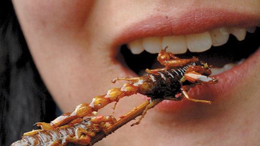 Eating insects (c) Rex Features