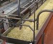 Cheese making2