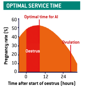 Graph showing optimal service time