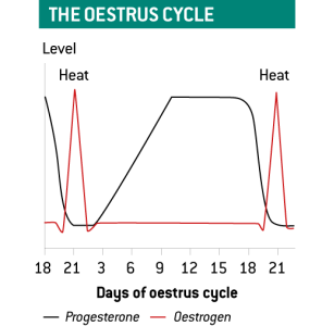 Graph showing the oestrus cycle