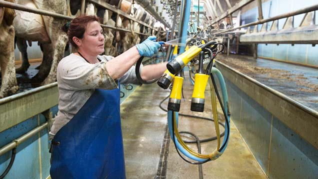 Woman farmer in dairy parlour
