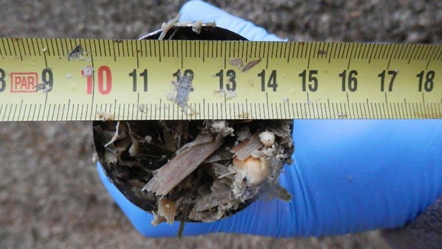 measuring-width-corer