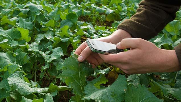 Farmer using smartphone technology in field